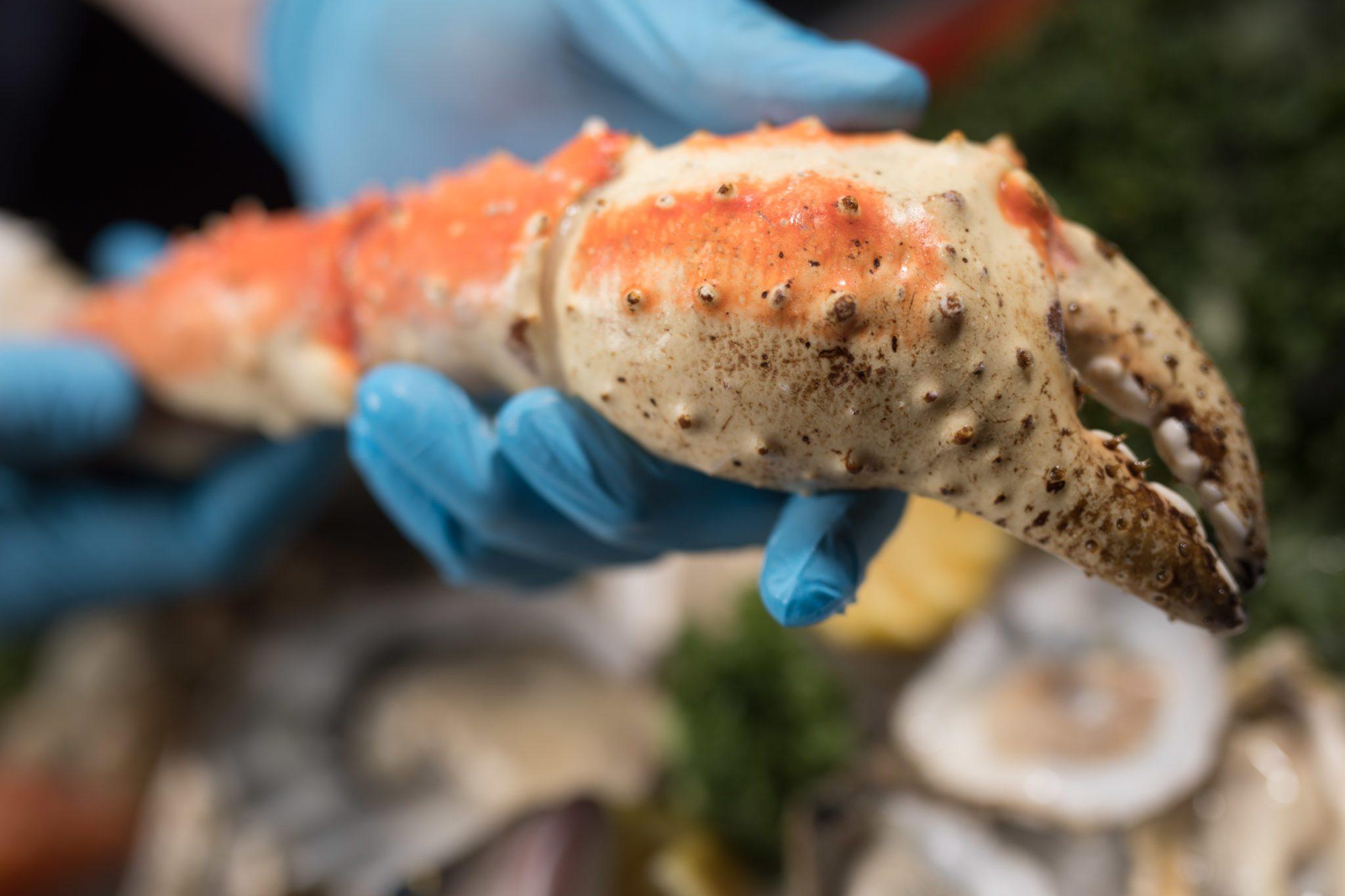 King Crab Leg